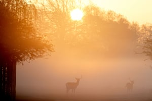 London, England. Deer silhouetted against the mist and the early morning sun in Bushy Park