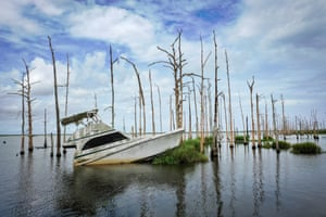 An abandoned boat sits in the water amid dead cypress trees in coastal waters and marsh in Venice, Louisiana. Many oak trees and cypress trees throughout Louisiana's coastal marshes have died due to a combination of the saltwater intrusion and subsidence. According to researchers at the National Oceanic and Atmospheric Administration (NOAA), Louisiana's combination of rising waters and sinking land give it one of the highest rates of relative sea level rise on the planet.