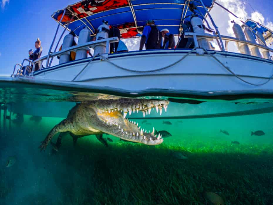 Snapping the crocodile: 'People ask how I didn't get eaten'