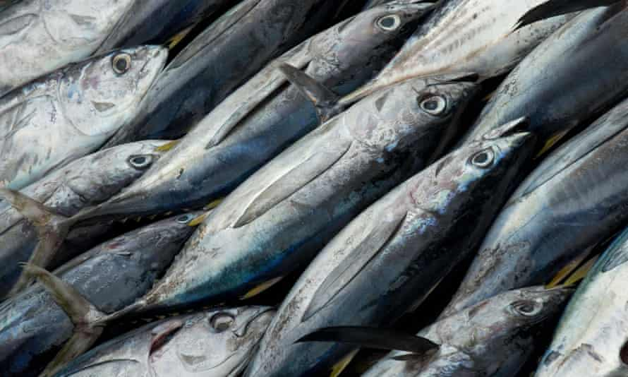 More than 40% of popular species such as tuna are being caught unsustainably, UN FAO says.