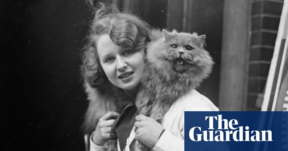 'My persian had a three-hour blow-dry!' 150 years of cat shows – then and now