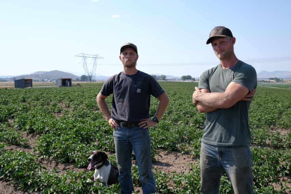 Bryce Balin, right, and Trent Balin, with his dog Colter, at a potato field on their farm outside Klamath Falls, Oregon.