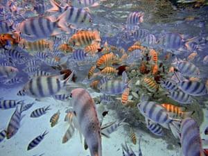 Snorkelling in the shallow waters of the Bora Bora lagoon, Moorea, French Polynesia
