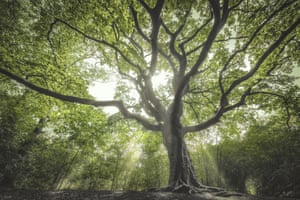 The Netherlands: the Witch Tree130-yeas-old beech (Fagus sylvatica), Bladel, North Brabant This tree provides the perfect setting as the last resting place of Black Kate, a woman that once led an infamous gang of robbers and smugglers.