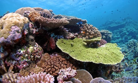 Reefs in the far northern sector of the Great Barrier Reef in very good condition