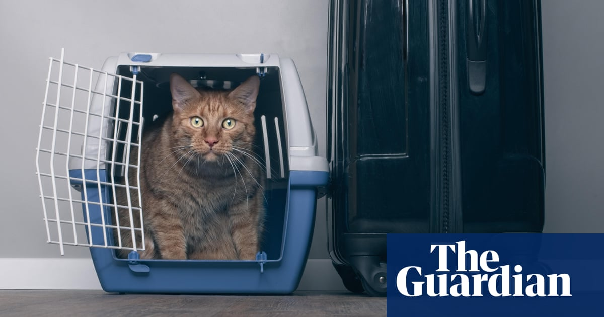 Brexit: pets will need papers for travel to EU and Northern Ireland