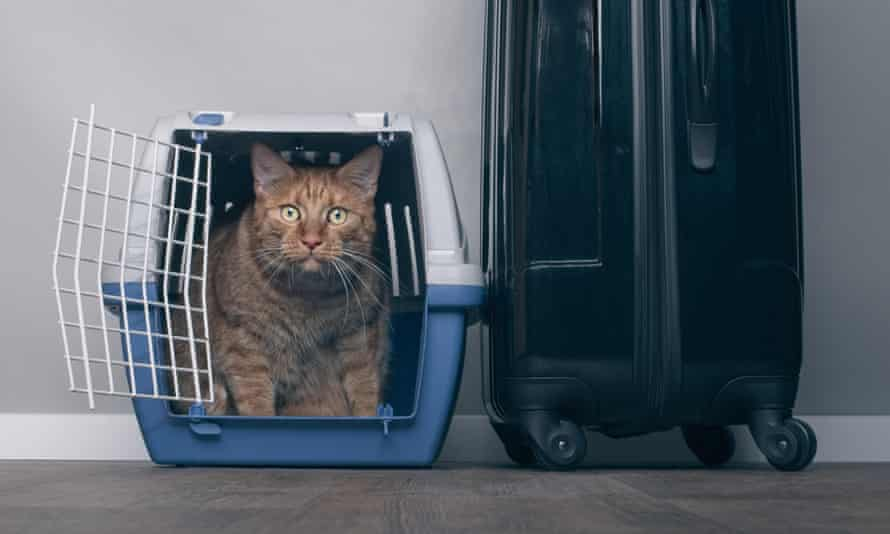 Ginger cat in a pet carrier next to a suitcase.