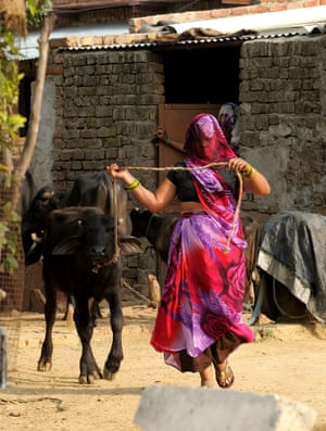 """<strong>Running with the cattle</strong><br>Veiled woman running with her buffalo in a village in North Delhi <br>Photograph: <a href=""""https://witness.theguardian.com/assignment/55b0f634e4b02ab2dca28ece/1639705"""">prerna02</a><a>/GuardianWitness</a>"""
