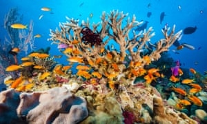 Reef scientists were told they should make 'trade-offs' with the Great Barrier Reef Foundation.