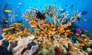 What should Australia do in response to the UN environment report? Global warming must stay below 2C to save the coral reefs