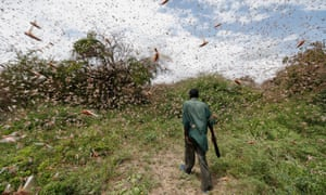 A man walks through a swarm of desert locusts near Kitui county, east of NairobiKenya.