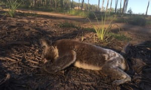 'Climate breakdown, land clearing, and invasive species are wreaking havoc on our natural environment. We're ranked fourth in the world for plant and animal extinctions'