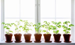Photograph of row of potted plants on windowsill