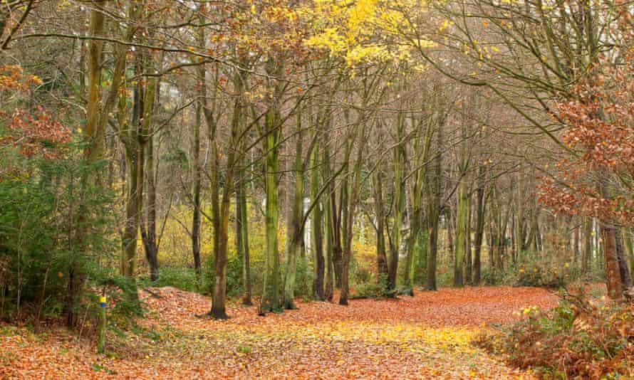 Bacton / Witton Wood