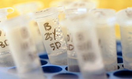 Testtubes used in genetic research