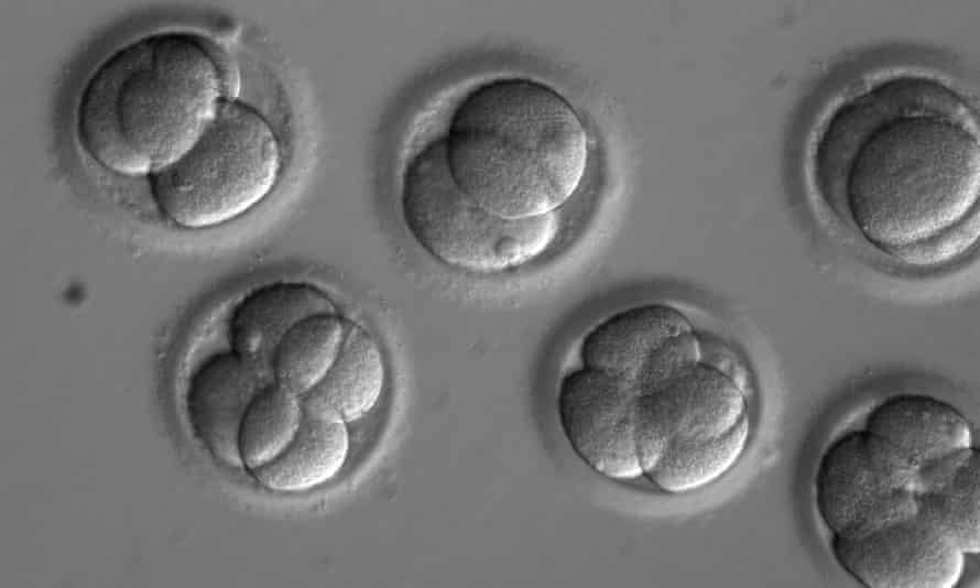 A stock image of human embryos