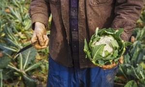 Farmer holding freshly cut cauliflower and knife