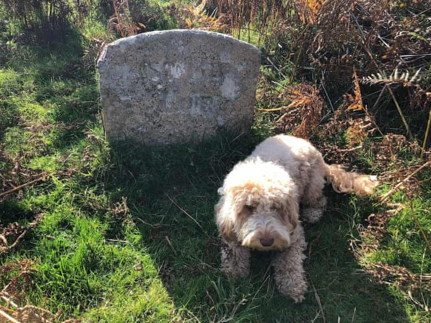 The East Birch Tor mine boundary stone on one of the old mining gullies at Headland Warren, guarded by a not very fearsome hound.