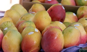 Kenya's mango farmers ditch chemicals to boost exports | Guardian