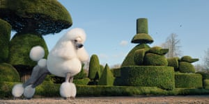 A creatively groomed poodle poses in the topiary gardens of Levens Hall in Kendal, Cumbria