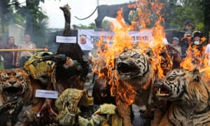Indonesian officials set fire to a stockpile of illegal items made from endangered animals, including tigers, sun bears and the Javan gibbon.
