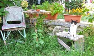 An overgrown garden