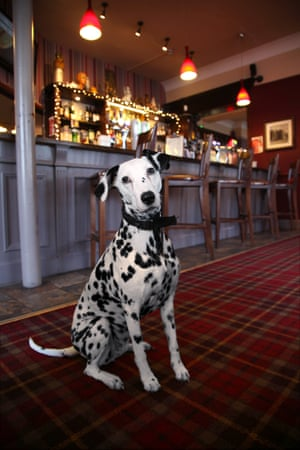 Coco at the Chandos Arms, Colindale