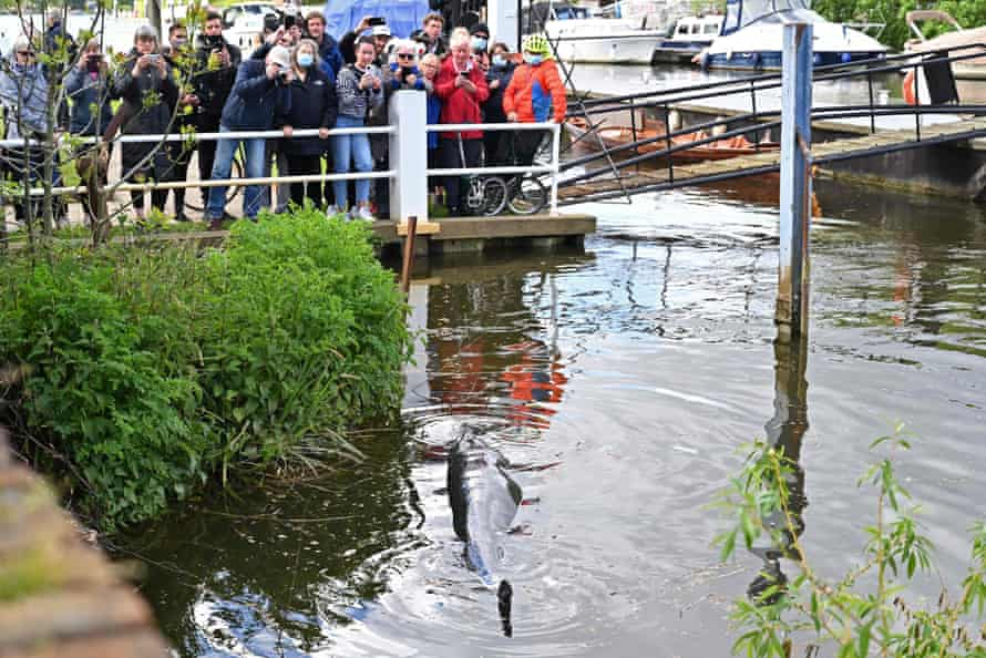 People watch the whale in the water at Teddington in southwest London.