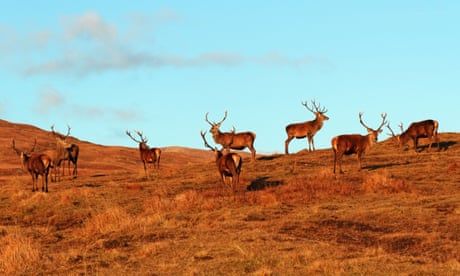 'People think the deer are lovely. Then they learn more about it': the deer cull dilemma