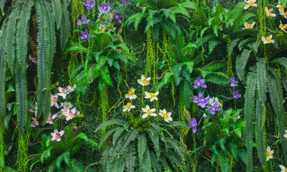 Green thoughts: propagate your own plants, such as ferns.