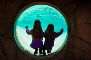 Children watch the Humboldt penguins swim round their tank. Numbers of Humboldts, native to South America, are declining in the wild