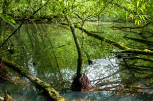 Willow reflections in a wooded kettle hole pond.