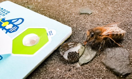 'Bee saviour' sugar cards could save starving insects