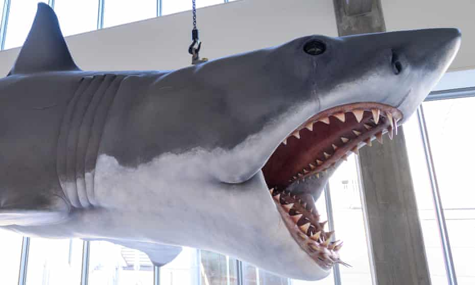 We're going to need a bigger museum … 'Bruce', the animatronic shark from Jaws, now installed at the museum.