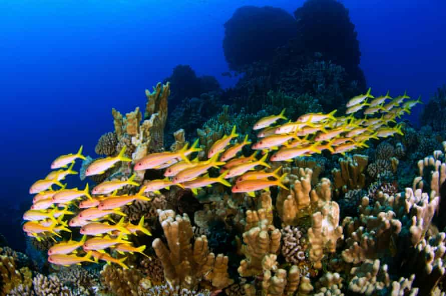 Up to 77% of the Pacific Ocean's fish abundance occurs in Rapa Nui and recent expeditions discovered several new species.