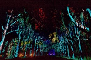 Six Seasons: a 700m tunnel of light, sound and stories which was projected across red-flowering gums at Kings Park in Perth.