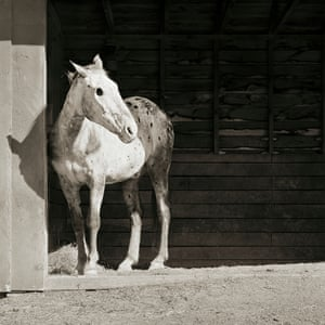 Buddy, an Apaloosa horse aged 28, went to a sanctuary after losing his sight