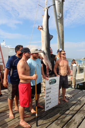 Some opponents of the tournaments are happy for them to continue if they use circle-shaped hooks that easily allow the release of sharks after capture.