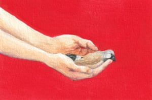 hands holding a dead finch