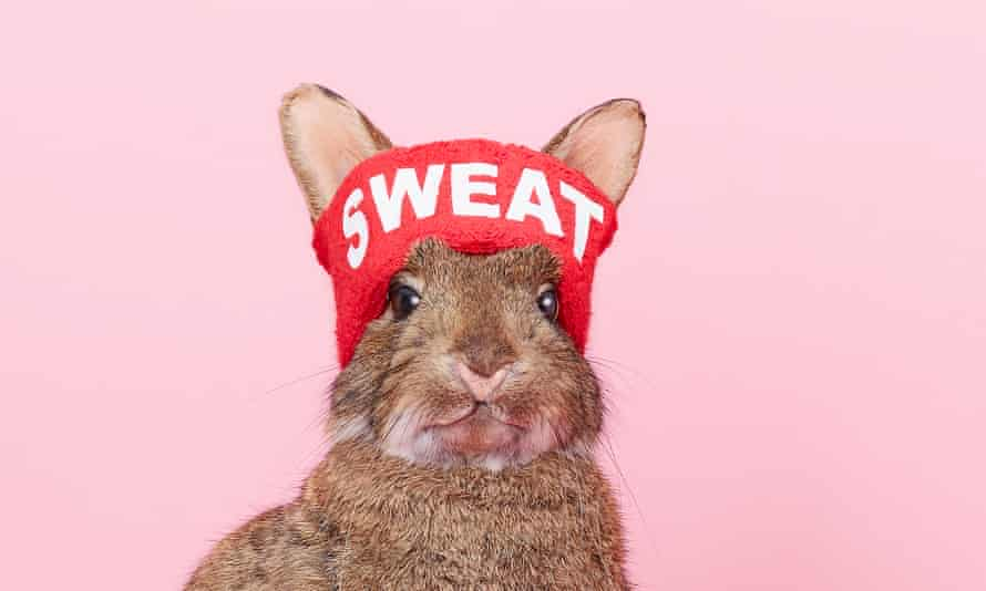 Photograph of rabbit in sweat band