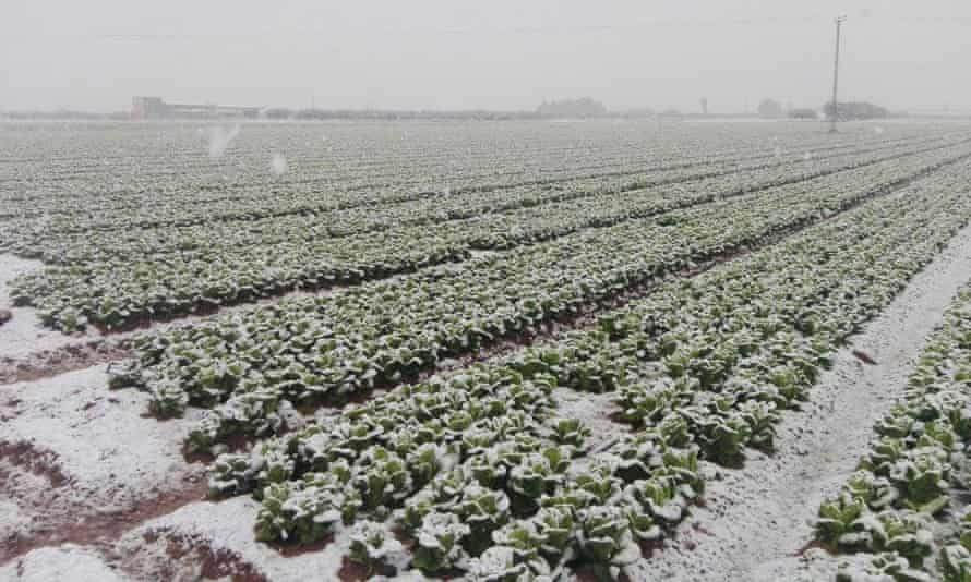 Bad weather has caused big shortages of courgettes, aubergines, all salad leaves, cucumbers, celery, peppers, tomatoes and broccoli.