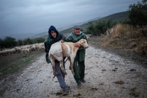Antonio Alarcon and his son Daniel carry an injured goat with a broken hoof