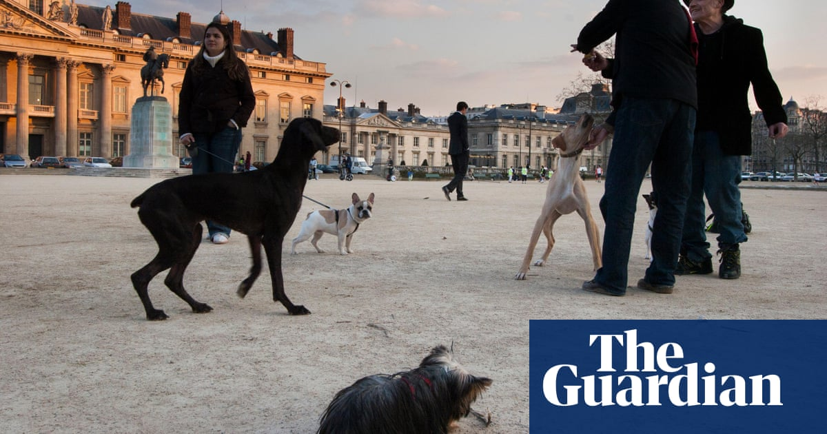 Barklife: Paris finally allows dogs into its public parks | Cities