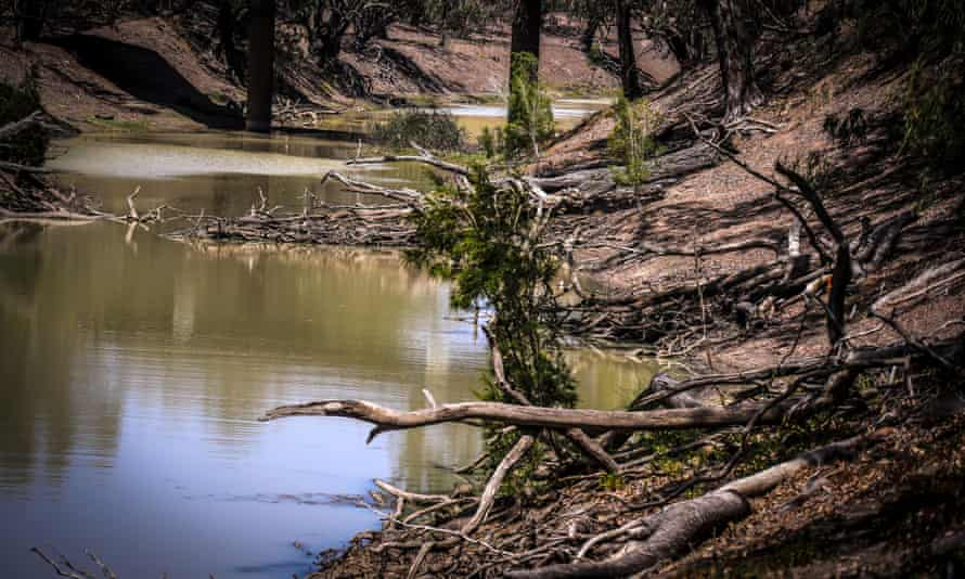 Dead trees line the banks of the Barwon River, near Walgett, New South Wales