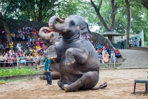 Elephants are made to perform tricks during a show at Colombo Zoo, in Sri Lanka