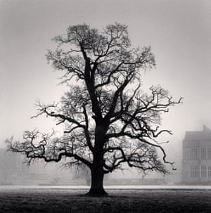 Graceful Oak, Broughton, Oxfordshire, England. 2005, by Michael Kenna