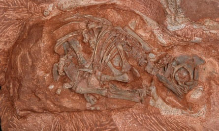 The embryonic skeleton of the dinosaur Massospondylus