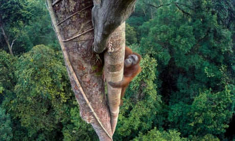 2016 wildlife photographer of the year - winners in pictures