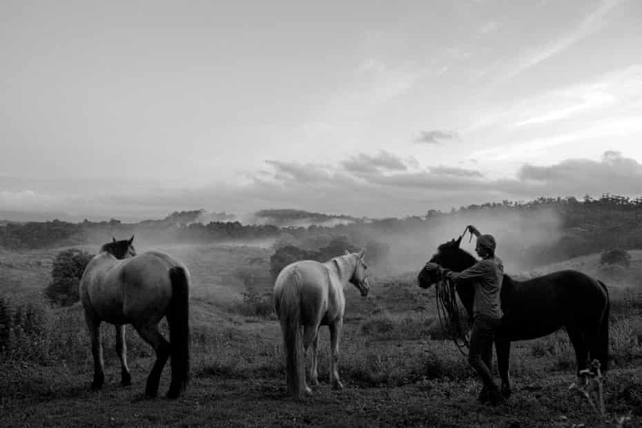 The morning ritual in the early morning fog on a property on Black mountain road, Queensland.