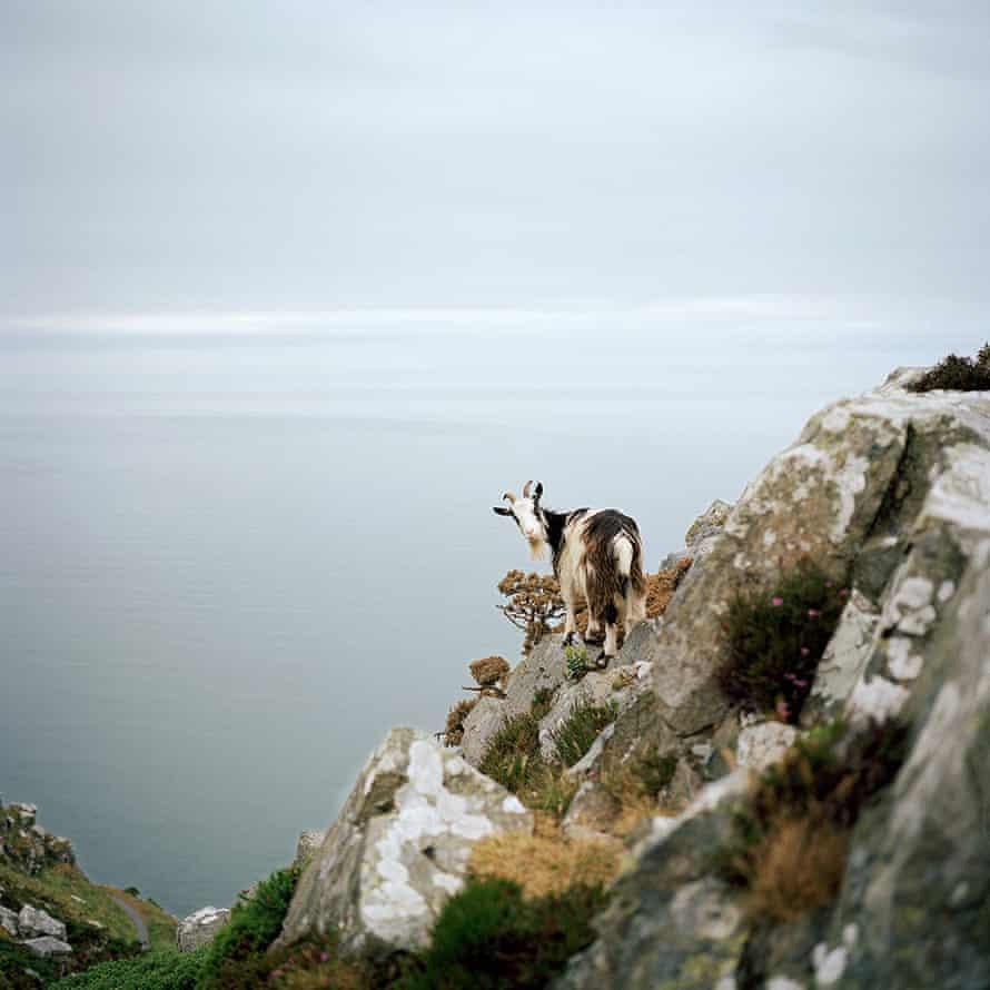Lynton Goat, Devon, UK, 2017 by Jon Tonks